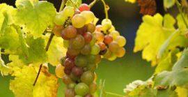 Сицилийские вина. Традиции и современность.
