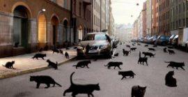 Итальянские приметы и суеверия